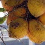 Kokosöl Vitamine